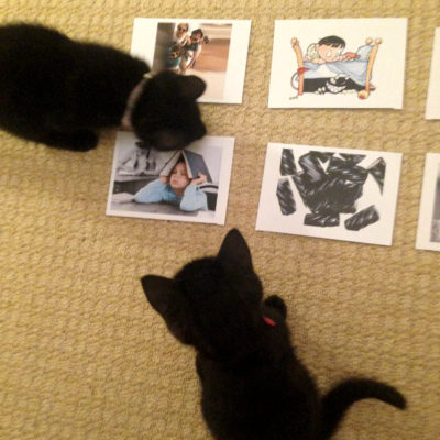 Meow's the time: our new cat research methodology