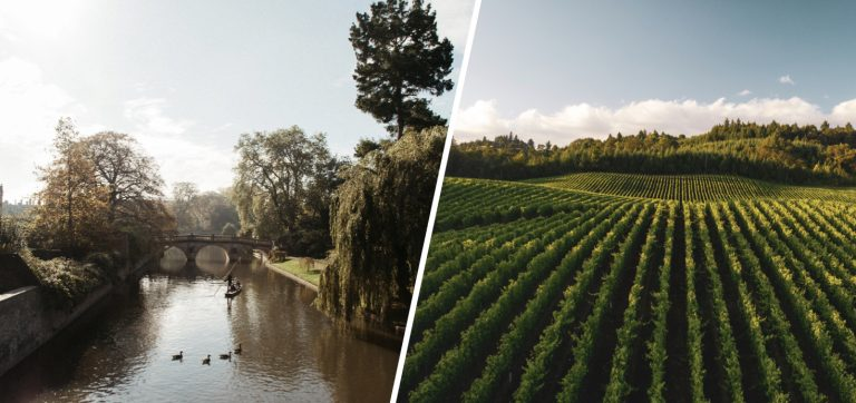 cambridge vineyard